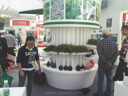 """""""种业强则农业兴""""--湘研种业在第十五届广州种业博览会上大放异彩"""
