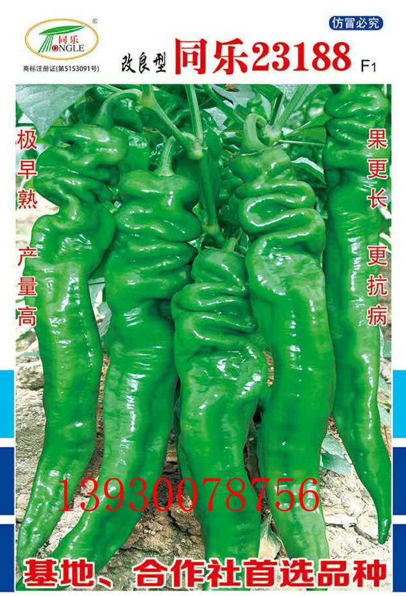 在全国各地招收辣椒种子代理