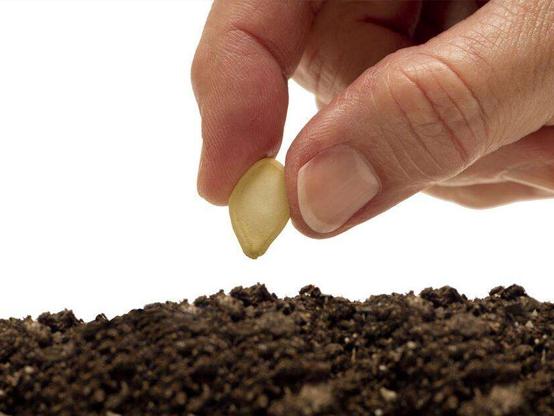 农业部关于贯彻实施《种