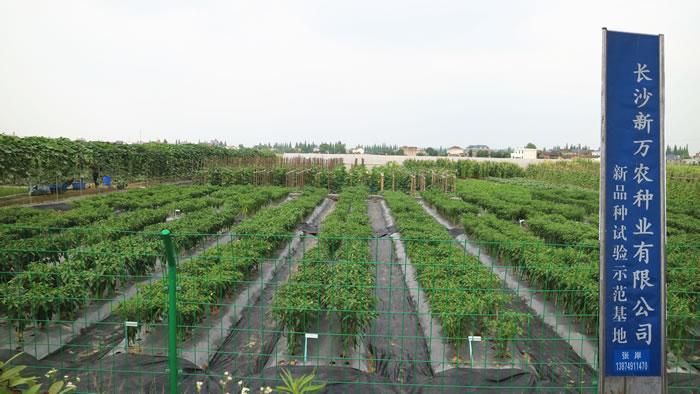 2017年长沙新万农种业