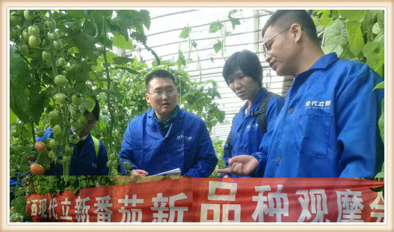 广西蔬菜种子厂优质番