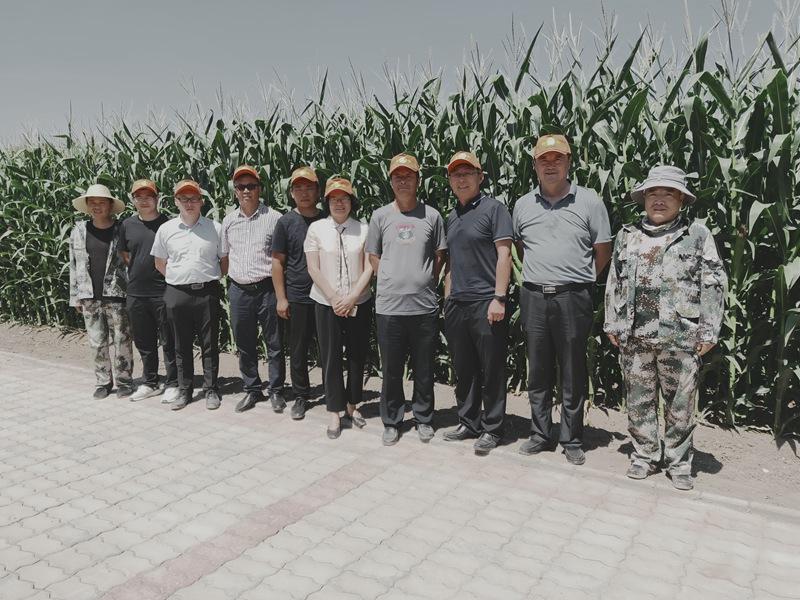 4家种业联合申报昌吉州