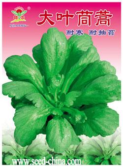 大叶茼蒿_种子网-天鸿种子网产品中心-最新最全的种子
