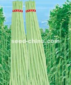 极早碧翠-豇豆