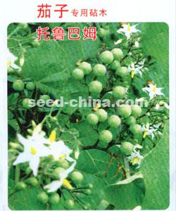 茄子专用砧木