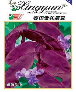 紫花眉豆--眉豆