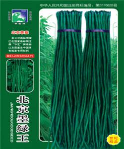 北京墨绿王--豇豆