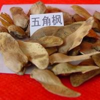 五角枫种子、木荷种子、红叶小檗种子