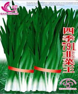 四季791韭菜王