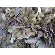 出售,红枫种子、黑松种子等