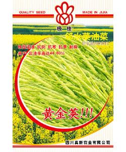 黄金荚 黄油菜