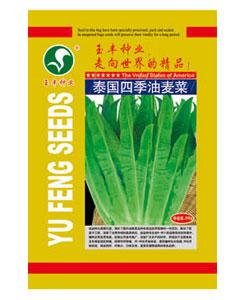 泰国四季油麦菜