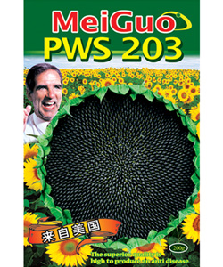 PWS-203油葵