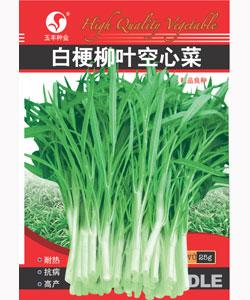 白梗柳叶空心菜