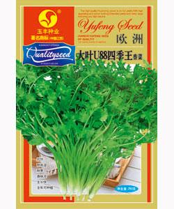 大叶u88四季王香菜