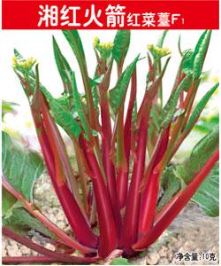 湘红火箭红菜薹F1