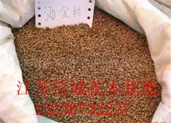 出售,红枫种子、红豆杉种子、凤凰木种子等