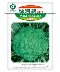 绿鹦鹉60天青花菜