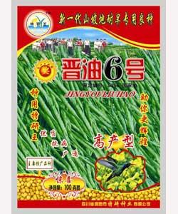 供应纯黄油菜种子-晋油6号