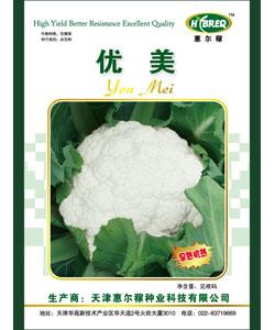 优美  花菜新品种