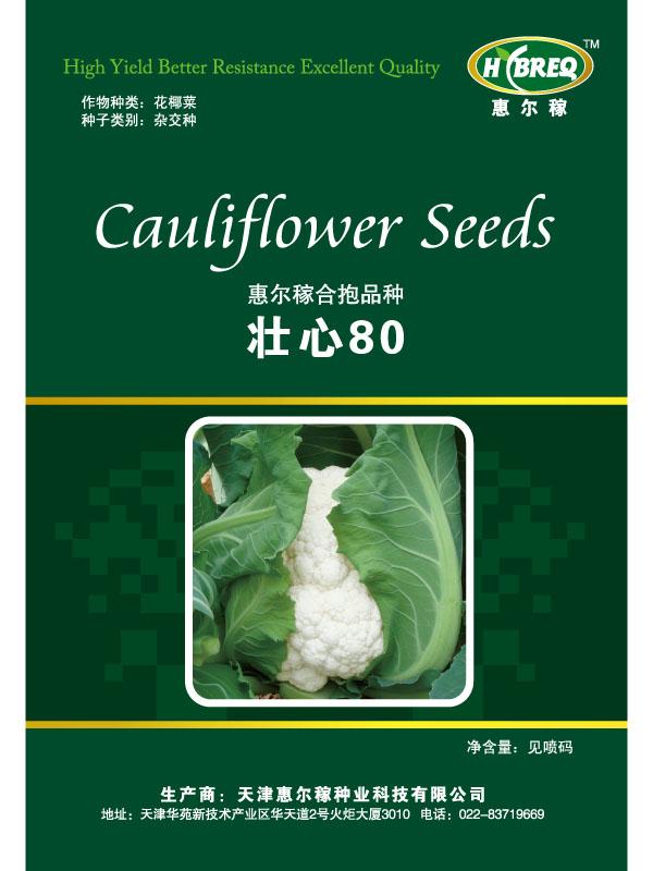 壮心80 花菜种子 花菜新品种