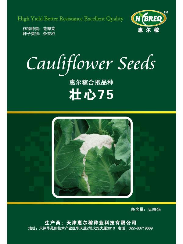 壮心75 花菜种子 花菜新品种