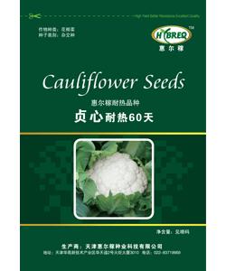 贞心耐热60天  花菜新品种