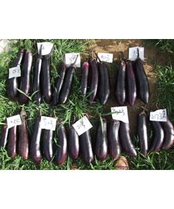 紫色1A系列产品对比