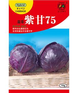 亚非紫甘75