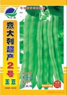 供应豆角种子-意大利超产2号玉豆