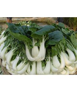 奶白菜1号