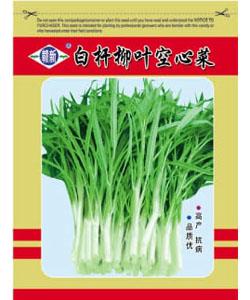 白杆柳叶空心菜