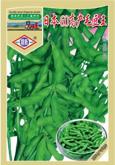 日本60高产毛豆王