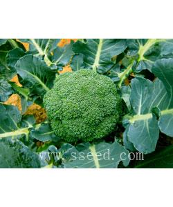 绿花菜2号