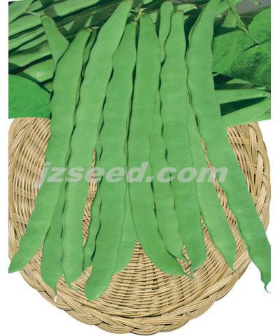 金龙王架豆