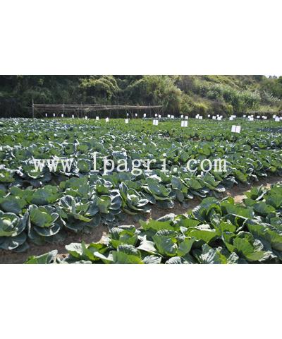 绿蒎农业科技示范园产品展示