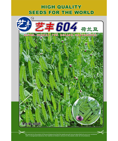 艺丰604荷兰豆