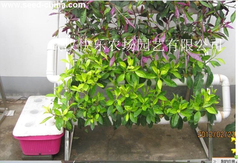 无公害蔬菜种植机 阳台种菜机 水培蔬菜 阳台管道式无