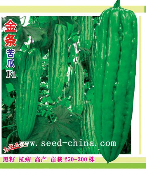 金条黑籽苦瓜(Jintiao Black Seed  Bitter gourd)
