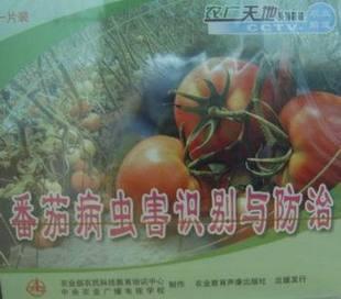 番茄病虫害识别与防治 VCD 1片