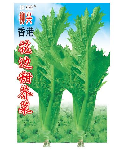香港花边甜芥菜_产品详细介绍,淘种网-网上购种中心图片