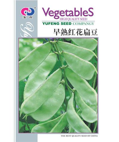 早熟红花扁豆