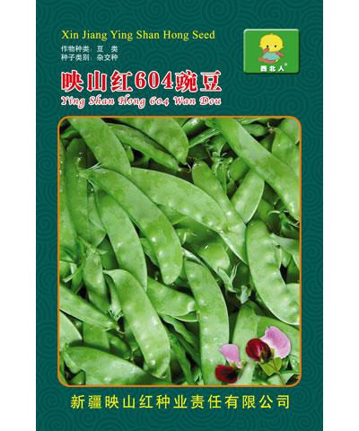 映山红604豌豆