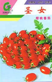 圣女-樱桃番茄小番茄