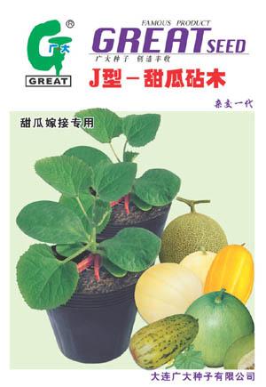 J型-甜瓜砧木