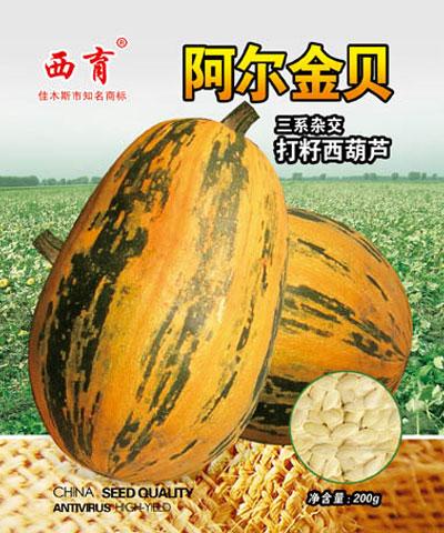 西育阿尔金贝籽用角瓜