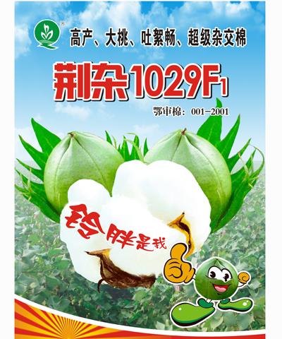 荆杂1029F1棉花