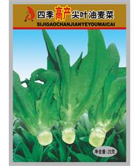 远大四季高产尖叶油麦菜20g