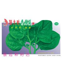 特大叶青藤菜种40g
