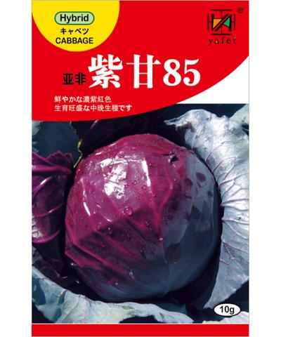 亚非紫甘85